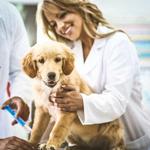 Veterinarios Y Comida de Animales